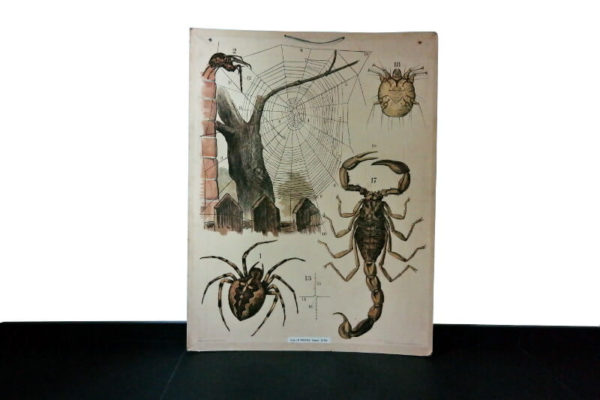 Schoolkaart spinnen – Foto 1