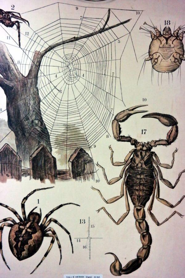 Schoolkaart spinnen – Foto 2