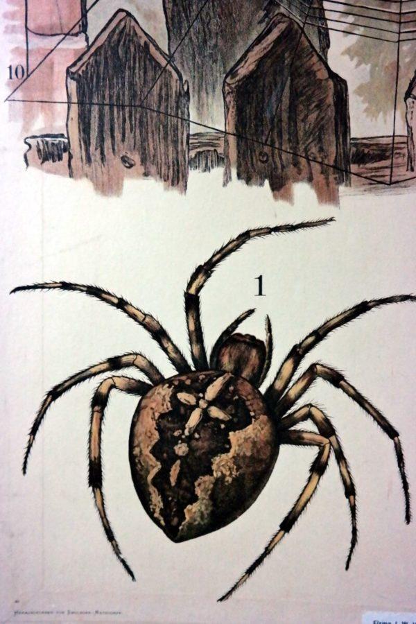 Schoolkaart spinnen – Foto 3