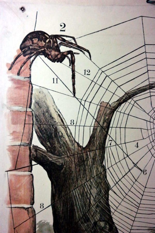 Schoolkaart spinnen – Foto 5